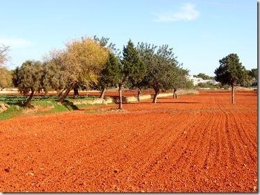 Herbstfarben - Ein frisch gepflügtes Feld