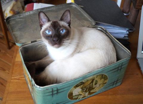 catbox Kopie